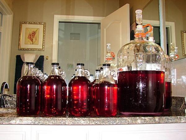 Вино из винограда средней полосы изабелла